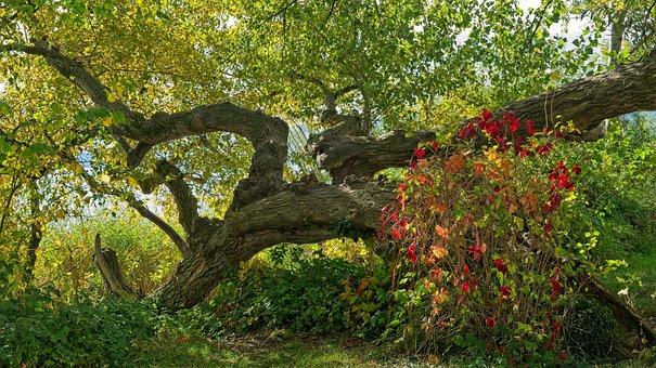 Autumn, Tree, Lying, Bush, Color, Atmosphere, Fantasy
