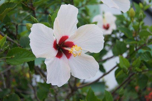 Flower, Flowers, Flower Cayenne