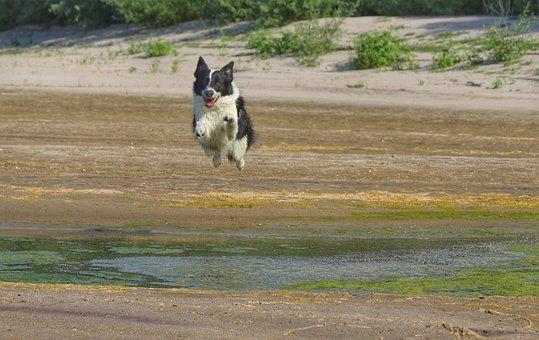 Dog, Jump, Game, Cars, Fly, Joy