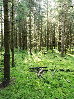 Forest, Trees, Wood, Green, Brown, Nature, Outside