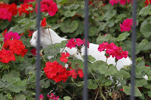 Cat, Flowers, White, Fuchsia, Garden, Nature