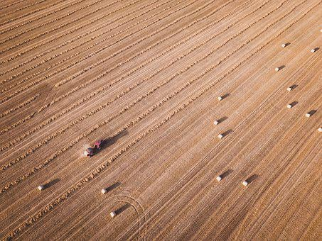 Grass, Autumn, Dry, Hay, Grain, Straw, Agriculture