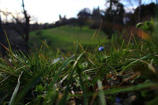 Flower, Grass, Nature, Spring, Green, Blue Flower