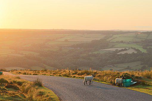Yorkshire, Sheep, Road, Sunset, Green, Gold, England