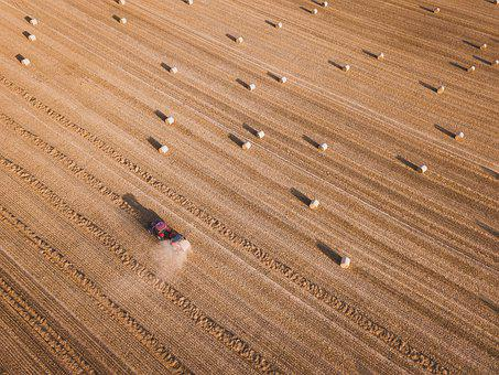 Agriculture, Harvest, Farm, Harvesting, Country, Grass