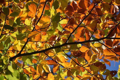 Leaves, Branch Trees, Autumn Color, Colored Leaves
