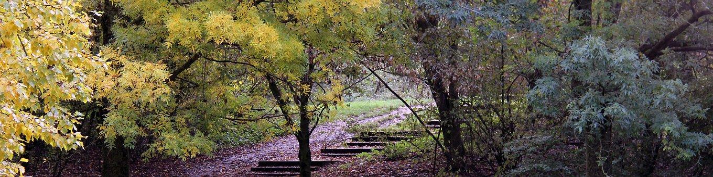 Landscape, Autumn, Autumn Landscape, Leaves, Trees
