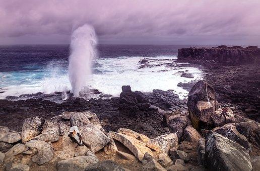 Espanola Island, Galapagos Islands, Marine Iguana