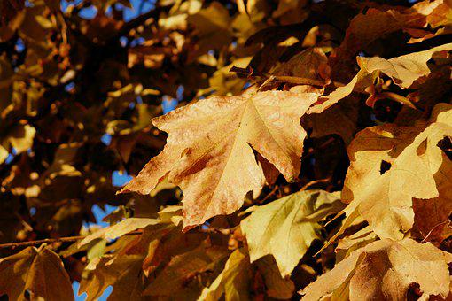 Fall, Leaves, Autumn, Nature, Tree, Colorful, Forest