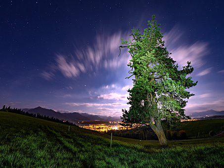 Sky, Tree, Outdoor, Nature, Moon, Night, Landscape