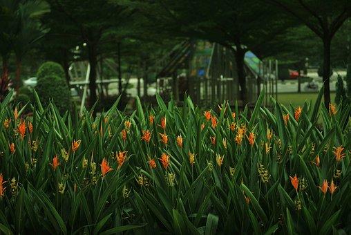 Flower, Grass, Plant, Garden, Green, Landscape, Orange