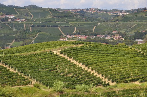 Vineyard, Wine, Vineyards, Screw, Vintage, Agriculture