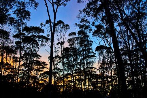 Sunrise, Dryandra, Woodlands, Sky, Nature, Forest