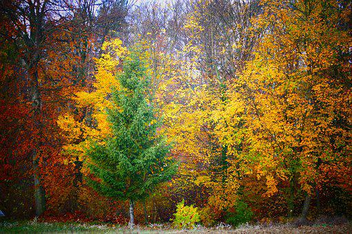 Tree, Autumn, Leaves, Forest