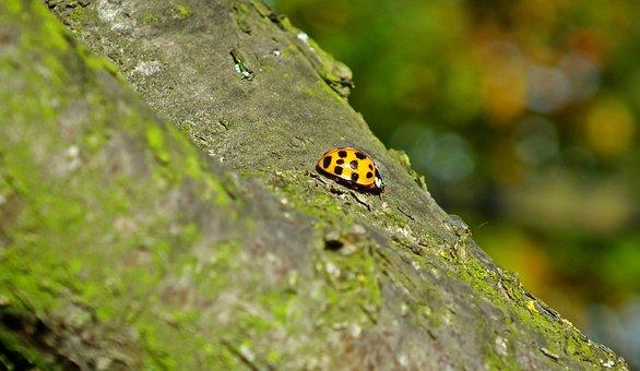 Ladybug, Insect, Nature, Macro, Garden, Green, Tree