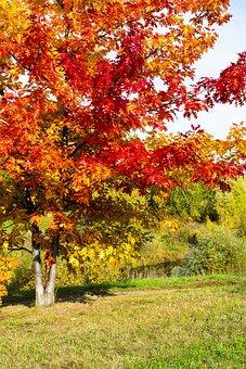 Autumn, Tree, Nature, Landscape, Trees, Leaves