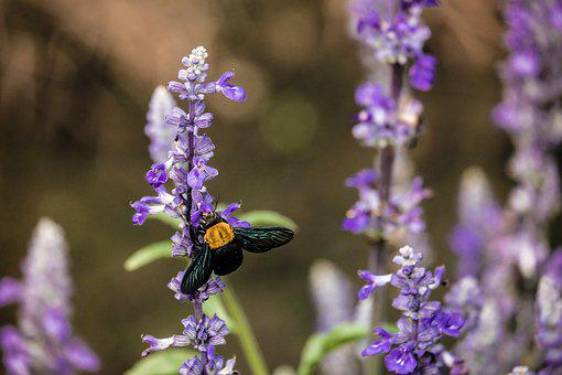 Bee, Animal, Nature, Spring, Flower, Wing, Plant