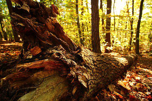 Woods, Wood, Poland, Forest, Wooden, Tree, Green