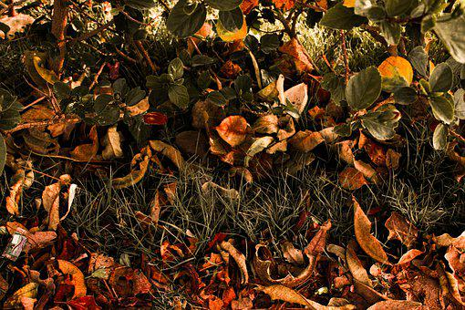 Leaves, Yellow, Nature, Autumn, Leaf, Plant, Green