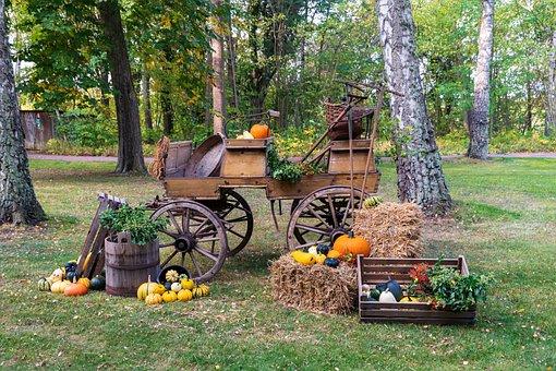 Autumn, Pumpkin, Harvest, Decoration, Thanksgiving