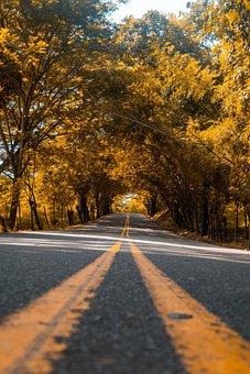 Path, Autumn, Forest, Landscape, Nature, Trees, Wood