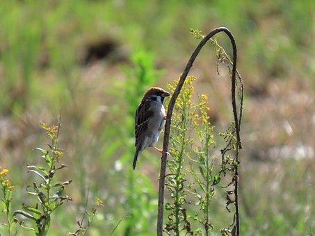 Animal, Flowering Plant, Bird, Wild Birds, Sparrow