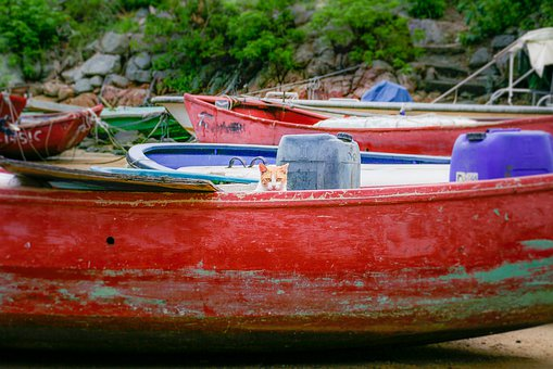 Cat, Boat, Red, Beach, Feline, Animal, Water, Shore