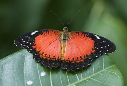 Butterfly, Nature, Summer, Fauna, Beautiful, Flora