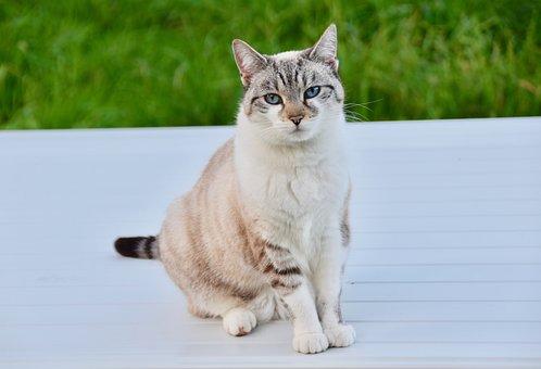Cat, Alley Cat, Cat Sitting Position, Nose Of Cat