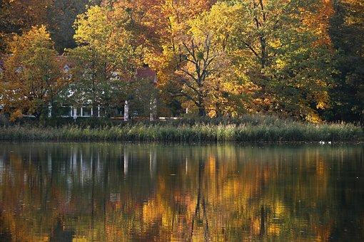 Gold, Autumn, Tree, Colors, Water, Lake, Foliage