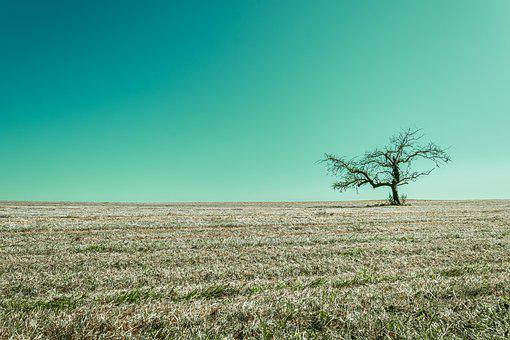 Tree, Arable, Landscape, Field, Nature, Sky, Cyan, Mood