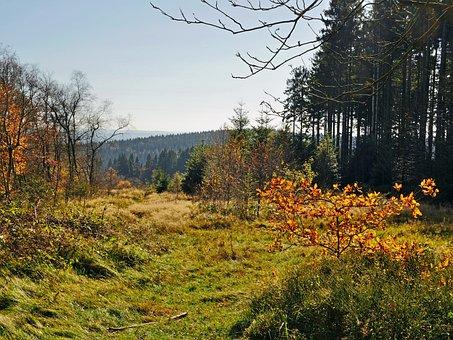 Autumn, Sauerland, Emerge, Fall Leaves