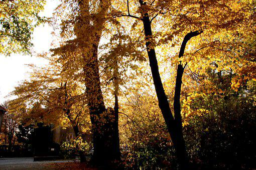 Gold, Autumn, Foliage, Forest, Color, Oct