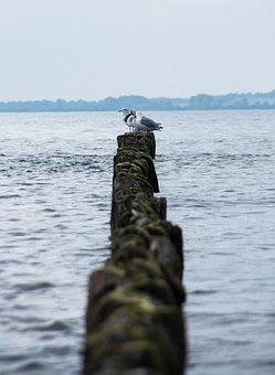 Breakwater, Baltic Sea, Sea, Gulls, Water, Beach, Coast