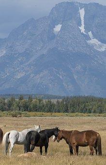 Horses, Landscape, Scenic, Mountain, Nature, Animal