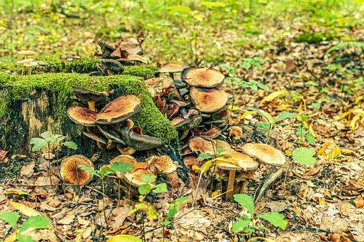 Log, Mushrooms, Forest, Moss, Tribe, Tree Fungi, Nature