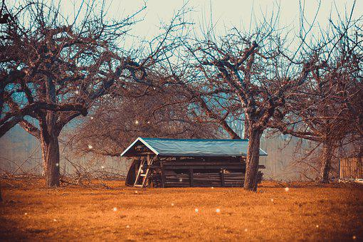 Log Cabin, Fruit Trees, Meadow, Nature, Landscape