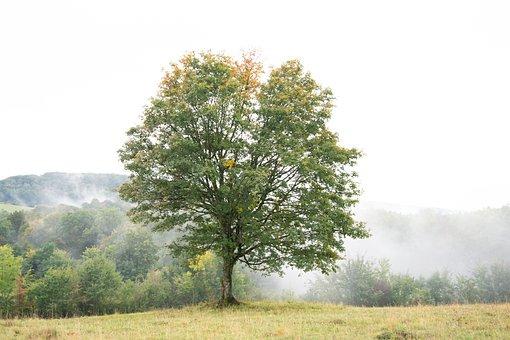 Tree, Fog, Scenic, Environment, Mysterious, Dark, Mood