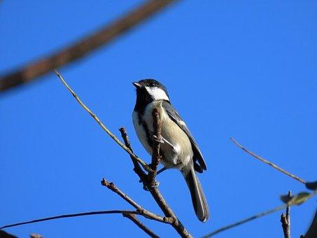 Animal, Sky, Wood, Bird, Wild Birds, Tits, Natural