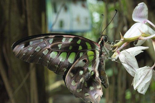 Butterfly, Nature, Flora, Summer, Animal World, Fauna