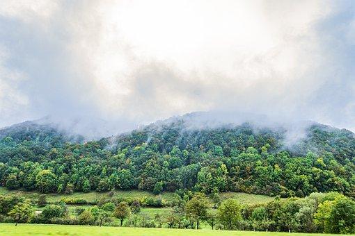 Forest, Fog, Trees, Nature, Landscape, Secret