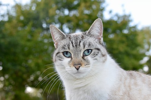 Cat, Alley Cat, Portrait Of Cat, Nose Of Cat, Blue Eyes