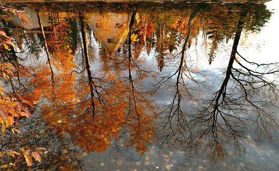 Reflections, Landscape, Nature, Trees, Colors, Fall