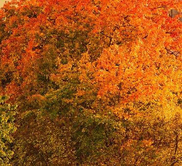 Autumn, Red, Yellow, Tree, Light, Romantic, Leaves