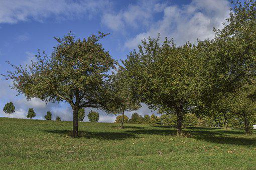 Landscape, Apple Trees, Nature, Sky, Trees, Meadow