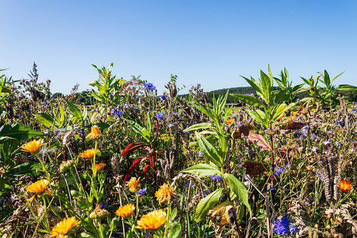 Flower Meadow, Flowers, Bloom, Garden Flowers, Summer