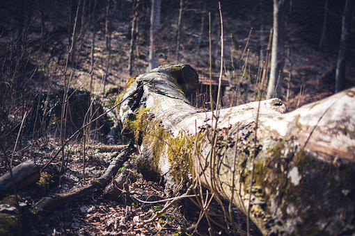 Log, Moss, Landscape, Tribe, Forest Floor, Atmosphere