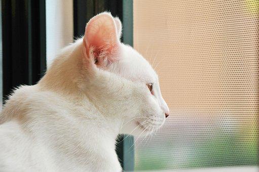 Cat, Window, Room, Observed, Tiger, Cute, Mammals, Wild