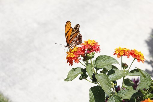 Butterfly, Nature, Mexico, Animals, Flower, Fauna