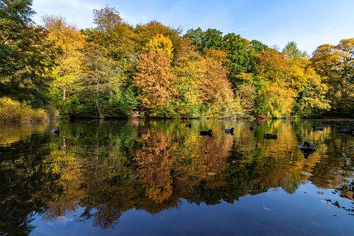 Autumn, Leaves, Color, Fall Foliage, Nature, Forest